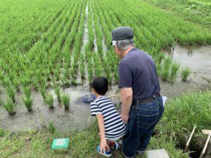 田んぼで遊ぶ子供