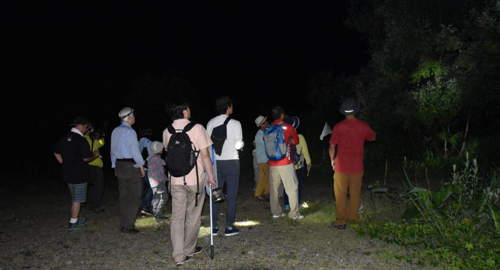暗闇の昆虫採集